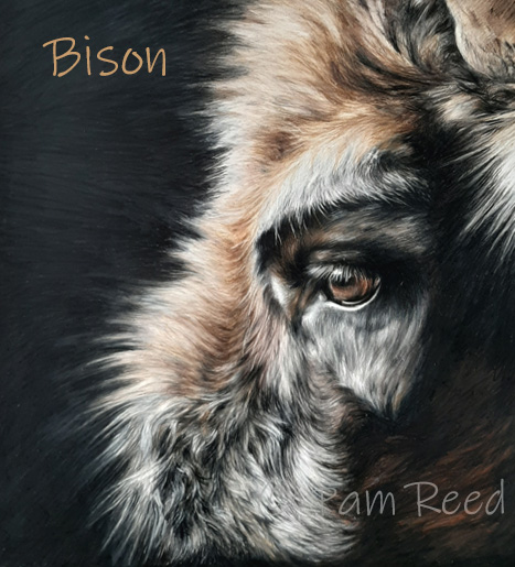 portrait of a European bison
