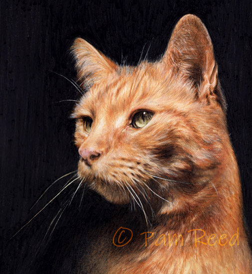 portrait of a gingercat