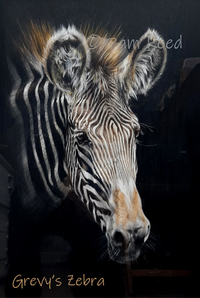 portrait of an African zebra