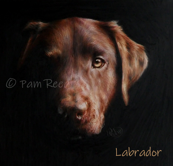 portrait of a chocolate labrador dog